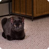 Adopt A Pet :: Autumn - Staten Island, NY