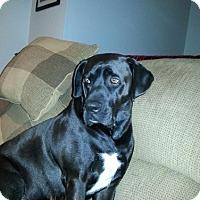Adopt A Pet :: Ace - Brattleboro, VT