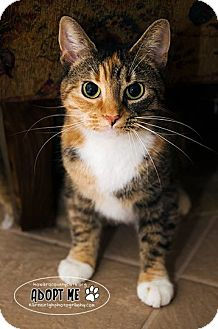 Domestic Shorthair Cat for adoption in Columbia, Maryland - Suni
