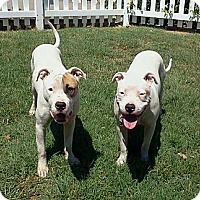 Adopt A Pet :: Hope & Shy - Santa Monica, CA