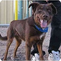 Adopt A Pet :: Nick - Golden Valley, AZ