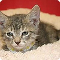 Adopt A Pet :: CORRINE - SILVER SPRING, MD
