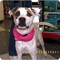 Adopt A Pet :: Giselle - Scottsdale, AZ