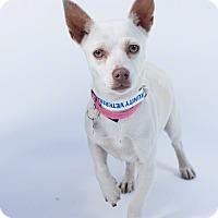 Adopt A Pet :: Tasha - Santa Barbara, CA