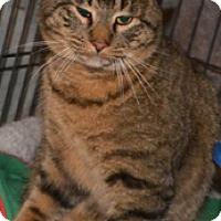 Adopt A Pet :: Larry - Taftville, CT