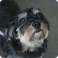 Adopt A Pet :: Elsa-placed - Canoga Park, CA