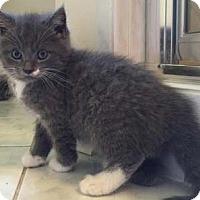 Adopt A Pet :: Bubba - Merrifield, VA