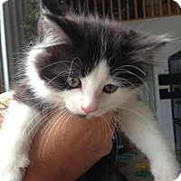 Adopt A Pet :: Muffin - Caistor Centre, ON