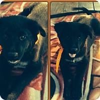 Adopt A Pet :: Bear meet me 10/9 - Manchester, CT