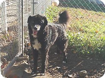 Carson City Dog Rescue