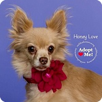 Adopt A Pet :: Honey Love - Mesa, AZ