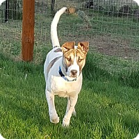 Adopt A Pet :: Astro - Puppy! - Bend, OR