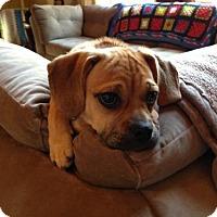 Adopt A Pet :: Milo - Tyrone, PA