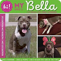 Adopt A Pet :: Bella - New Port Richey, FL