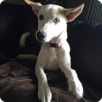 Adopt A Pet :: Skye - Aurora, IL