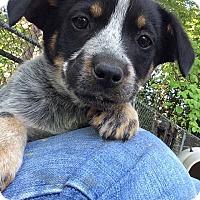 Adopt A Pet :: Sparky - Barnegat, NJ
