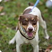 Adopt A Pet :: Ella - Daleville, AL