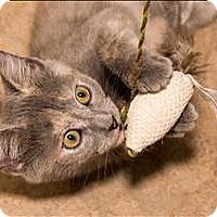 Adopt A Pet :: Shorty - Birmingham, AL
