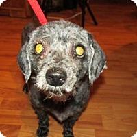 Adopt A Pet :: Paloma - Rocky Mount, NC