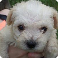 Adopt A Pet :: Kirk - Portland, OR