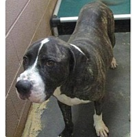 Adopt A Pet :: King - Des Moines, IA
