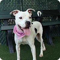 Adopt A Pet :: Riley - Lakeland, FL