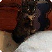 Adopt A Pet :: GEORGIA - Hampton, VA
