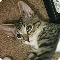 Adopt A Pet :: Tristan - Yorba Linda, CA