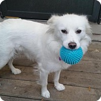 Adopt A Pet :: Ivory - Saskatoon, SK