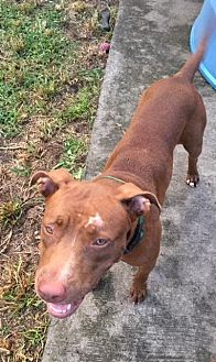 Terrier (Unknown Type, Medium) Mix Dog for adoption in Homestead, Florida - Jayna (courtesy listing)