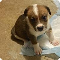 Adopt A Pet :: MIRAI - Mesa, AZ