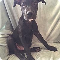 Adopt A Pet :: Emmett - Dayton, OH