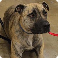 Adopt A Pet :: Toni - Von Ormy, TX