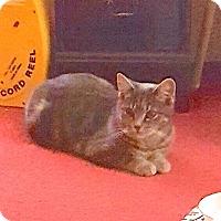 Adopt A Pet :: Elsy - Courtesy Listing - Sparta, NJ