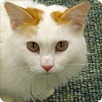 Adopt A Pet :: Ac/dc - Sherwood, OR