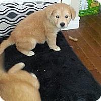 Adopt A Pet :: Luke - Northumberland, ON