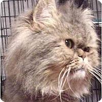 Adopt A Pet :: Makiado - Davis, CA