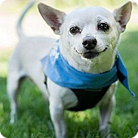 Adopt A Pet :: Branson - loves dogs,cats,laps - Los Angeles, CA