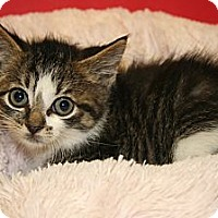 Adopt A Pet :: JACQUELINE - SILVER SPRING, MD