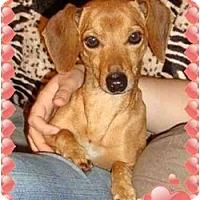 Adopt A Pet :: Jerry - Staunton, VA