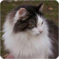 Adopt A Pet :: Jen Jen - Davis, CA