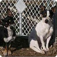 Adopt A Pet :: Abby & Molly - Albany, NY