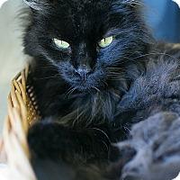 Adopt A Pet :: Hemi - Chicago, IL