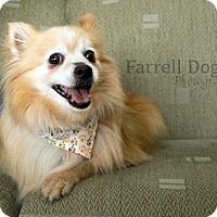 Adopt A Pet :: Willis - Toronto, ON