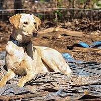 Adopt A Pet :: Henry - Wedowee, AL