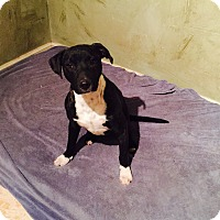 Adopt A Pet :: Jane - Snyder, TX