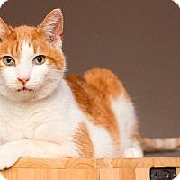 Adopt A Pet :: Simon - Addison, IL
