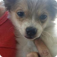 Adopt A Pet :: BONNIE - Rancho Cucamonga, CA