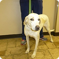 Adopt A Pet :: arrow - Oviedo, FL