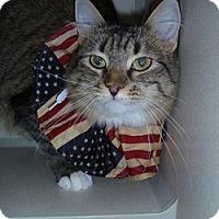 Adopt A Pet :: Vita - Hamburg, NY